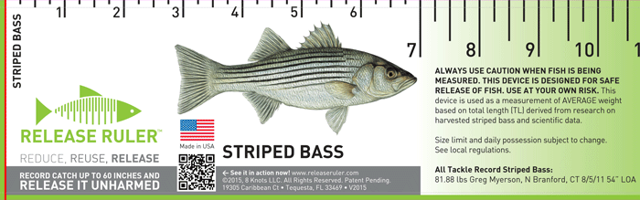 striped_bass_front