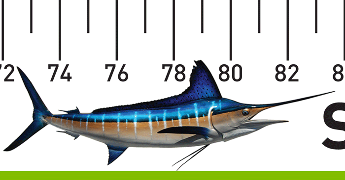 700_clip_rlr_stripedmarlin_rlr_metric-copy-2