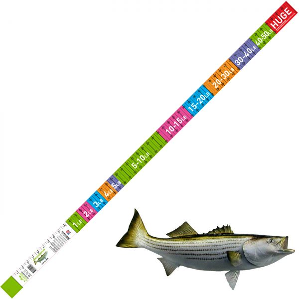 striped bass release ruler